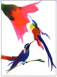 Postkarte «Kolibri» (Set à 50 Stk.)